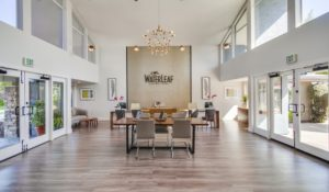 Waterleaf Leasing Remodel